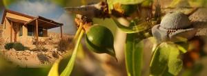 Плод аргана