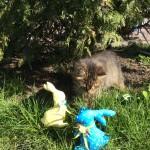 Зайчики, котик и трава